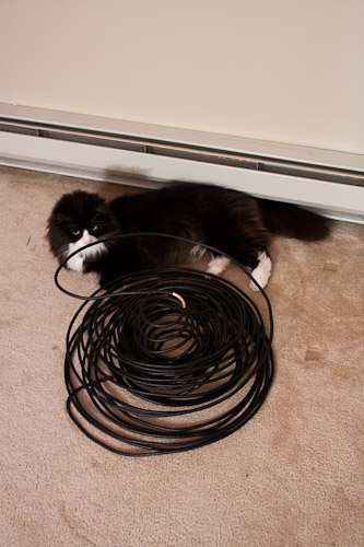 Kitty lying beside the collapsed antenna
